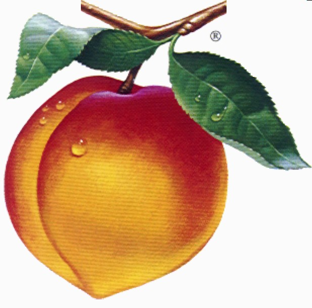 Peachtree Accounting Peach Logo